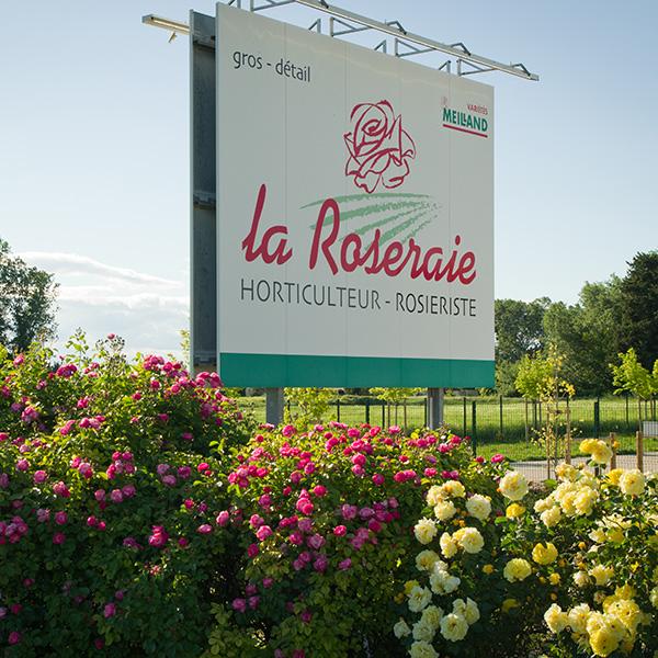 La-Roseraie-du-Vaucluse_