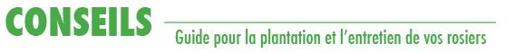 LaRoseraieduVaucluse_Conseils