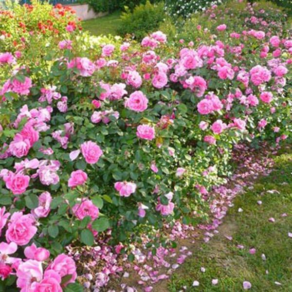 rosier anny duperey